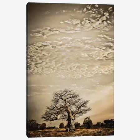 Baobab Hierarchy I Canvas Print #KTI1} by Klaus Tiedge Canvas Art Print