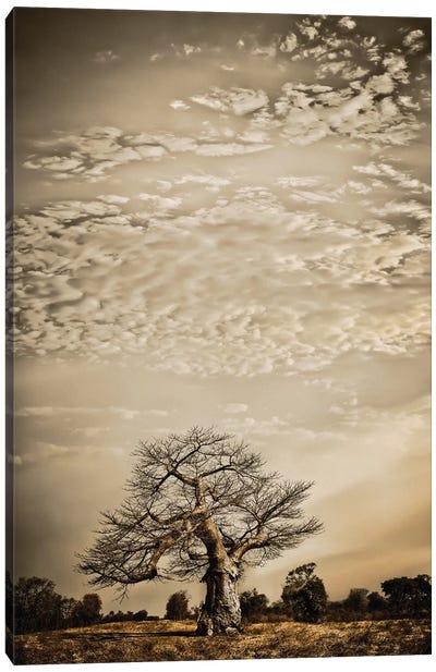 Baobab Hierarchy I Canvas Art Print