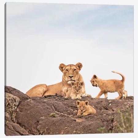 Color Lioness & Cubs Canvas Print #KTI20} by Klaus Tiedge Canvas Print