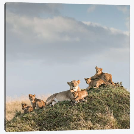 Color Lioness & Cubs Canvas Print #KTI21} by Klaus Tiedge Canvas Print