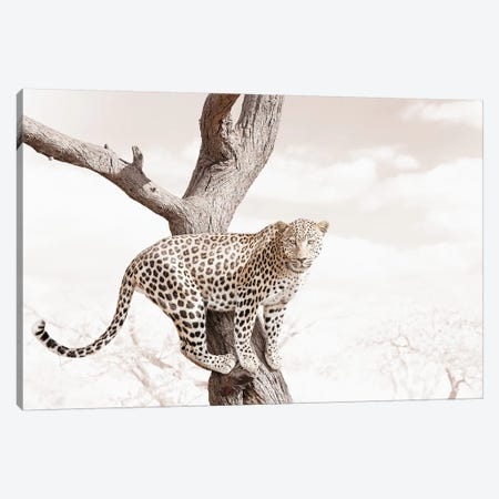 White Leopard Canvas Print #KTI27} by Klaus Tiedge Canvas Wall Art