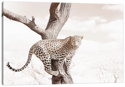White Leopard Canvas Art Print