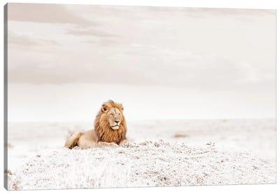 White Lion  Canvas Art Print