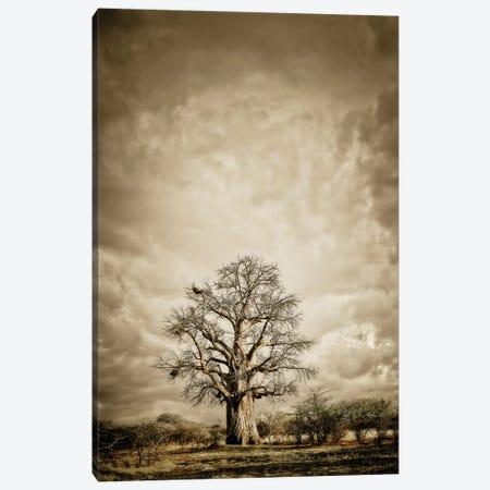 Baobab Hierarchy II 3-Piece Canvas #KTI2} by Klaus Tiedge Art Print