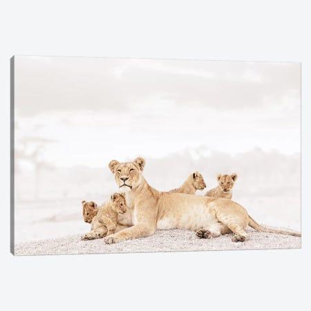 White Lioness & Cubs Canvas Print #KTI31} by Klaus Tiedge Canvas Artwork