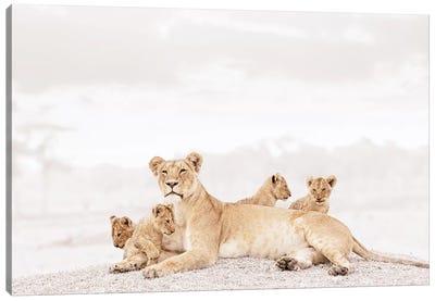 White Lioness & Cubs Canvas Art Print