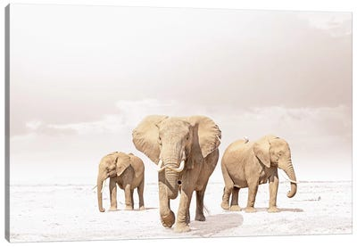 White Three Elephants Canvas Art Print