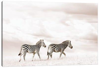 White Zebra Duo Canvas Art Print