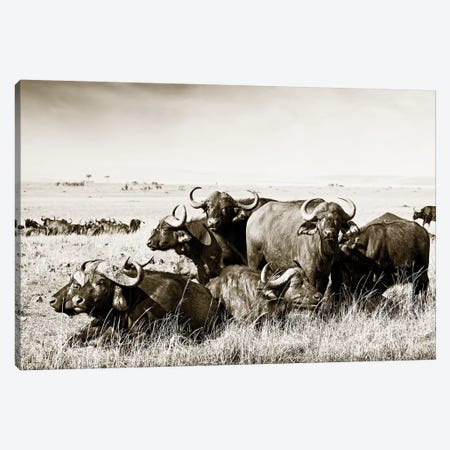 Allied Buffaloes Canvas Print #KTI39} by Klaus Tiedge Canvas Art