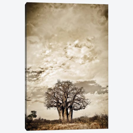 Baobab Hierarchy III Canvas Print #KTI3} by Klaus Tiedge Canvas Print