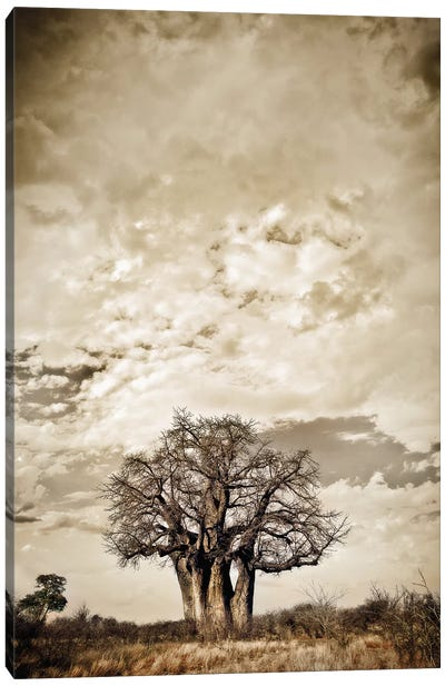 Baobab Hierarchy III Canvas Art Print