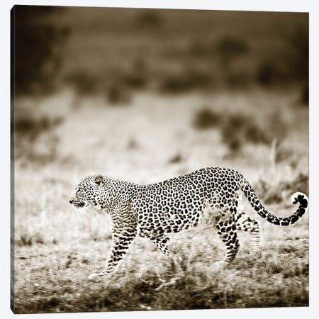 Approaching Leopard Canvas Print #KTI40} by Klaus Tiedge Canvas Art Print