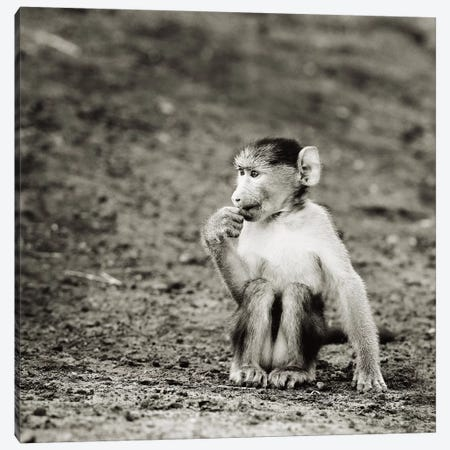 B&W Cheekey Monkey Canvas Print #KTI41} by Klaus Tiedge Art Print
