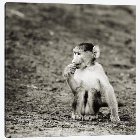 B&W Cheekey Monkey Canvas Print #KTI41} by Klaus Tiedge Art Print