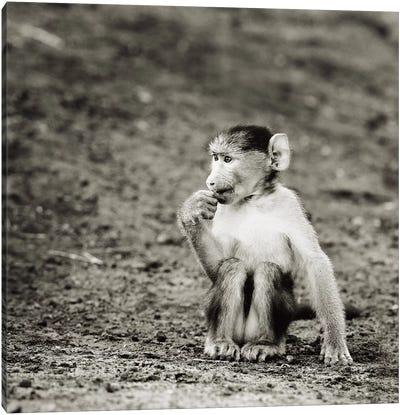 B&W Cheekey Monkey Canvas Art Print