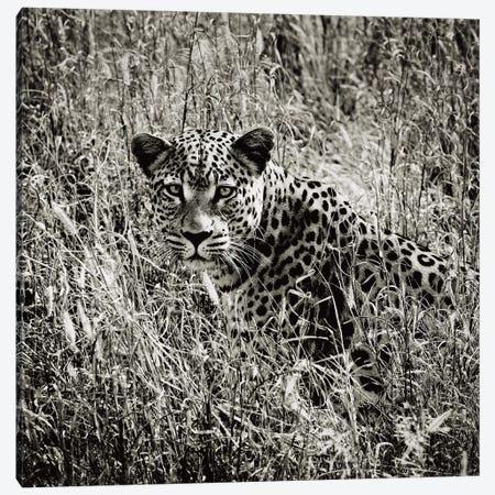 B&W Elusive Leopard  Canvas Print #KTI43} by Klaus Tiedge Canvas Print
