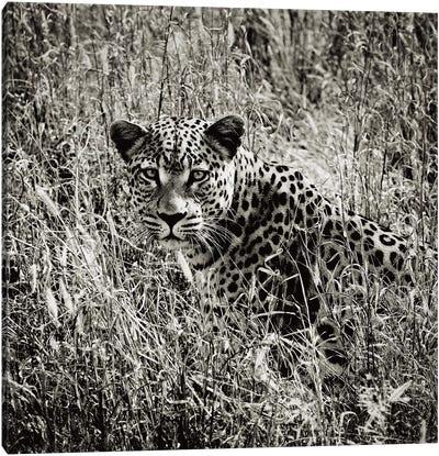 B&W Elusive Leopard  Canvas Art Print
