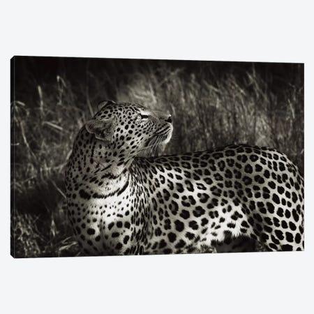 B&W Leopard At Rest Canvas Print #KTI46} by Klaus Tiedge Canvas Artwork