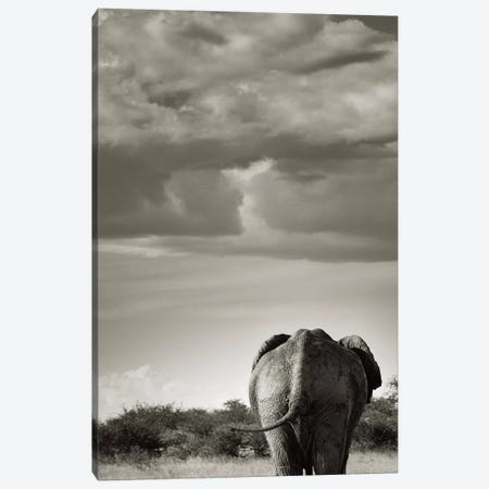 B&W Returning Elephant Canvas Print #KTI49} by Klaus Tiedge Canvas Print