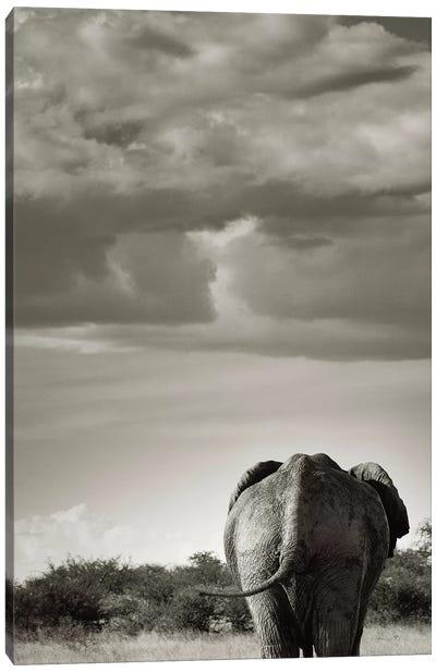 B&W Returning Elephant Canvas Art Print