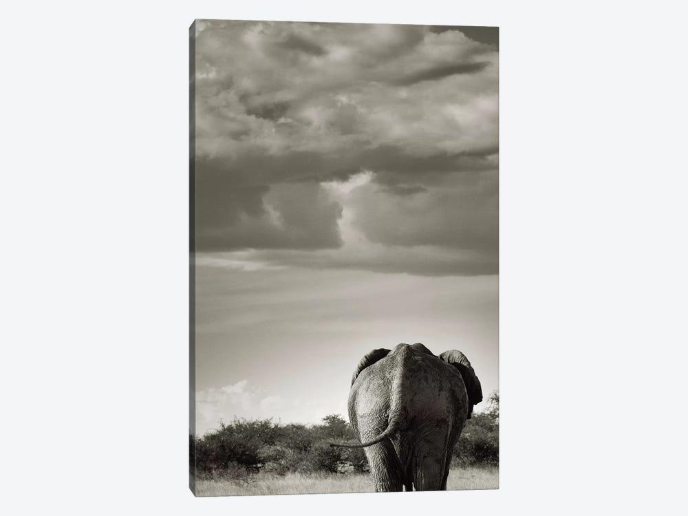 B&W Returning Elephant by Klaus Tiedge 1-piece Art Print