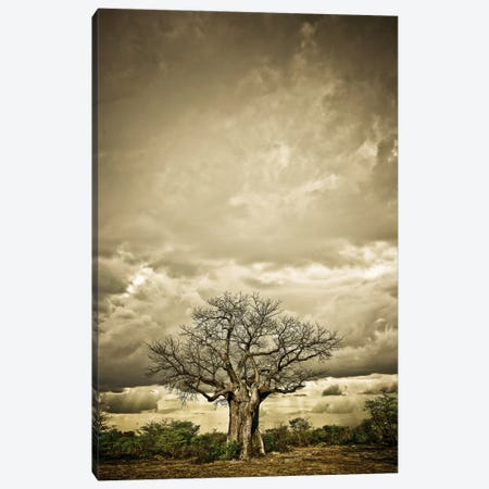 Baobab Hierarchy IV Canvas Print #KTI4} by Klaus Tiedge Canvas Artwork