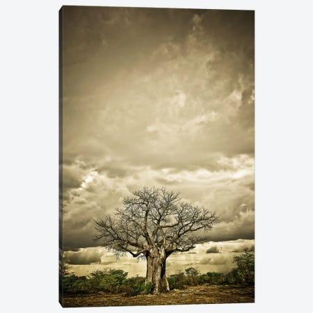 Baobab Hierarchy IV 3-Piece Canvas #KTI4} by Klaus Tiedge Canvas Artwork