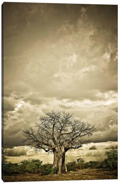 Baobab Hierarchy IV Canvas Art Print