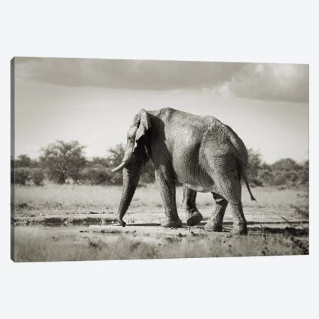 B&W Solitary Elephant Canvas Print #KTI50} by Klaus Tiedge Canvas Artwork