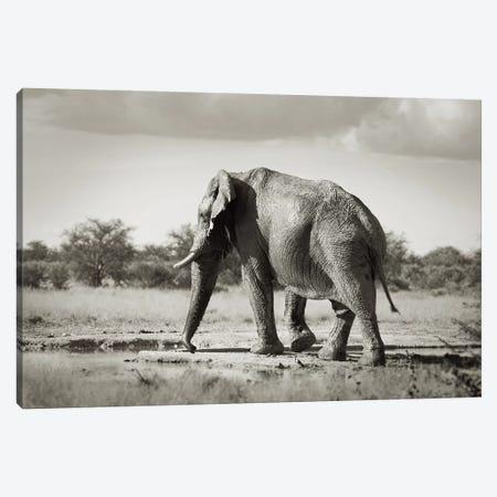 B&W Solitary Elephant Canvas Print #KTI50} by Klaus Tiedge Canvas Artwork
