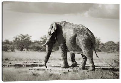 B&W Solitary Elephant Canvas Art Print