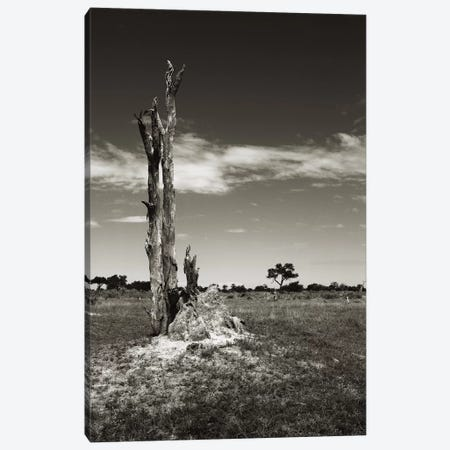 B&W Termite Hill 3-Piece Canvas #KTI52} by Klaus Tiedge Canvas Wall Art