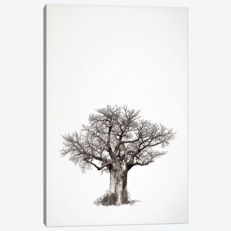 Baobab Legacy IV 3-Piece Canvas #KTI53} by Klaus Tiedge Canvas Artwork
