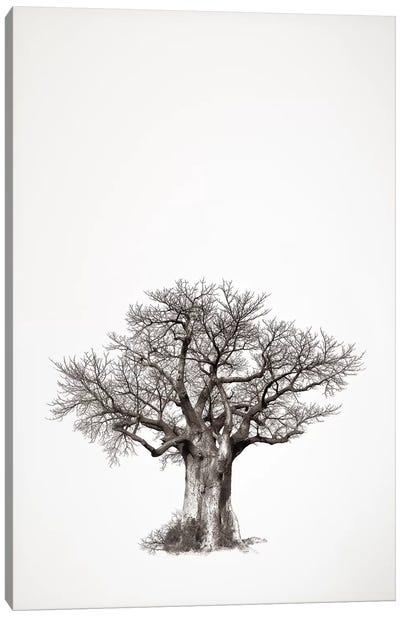 Baobab Legacy IV Canvas Art Print