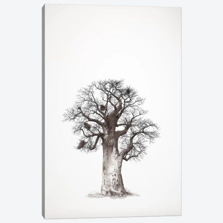 Baobab Legacy V 3-Piece Canvas #KTI54} by Klaus Tiedge Canvas Print