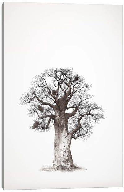 Baobab Legacy V Canvas Art Print
