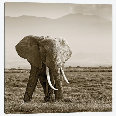 Big Tusked Elephant Canvas Print #KTI55} by Klaus Tiedge Art Print