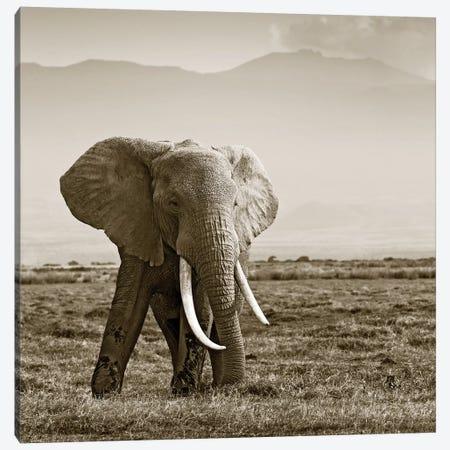 Big Tusked Elephant Canvas Print #KTI55} by Klaus Tiedge Art Print