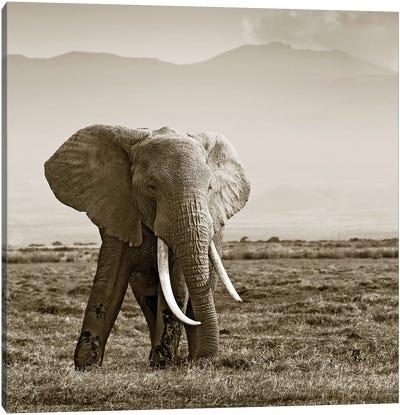 Big Tusked Elephant Canvas Art Print