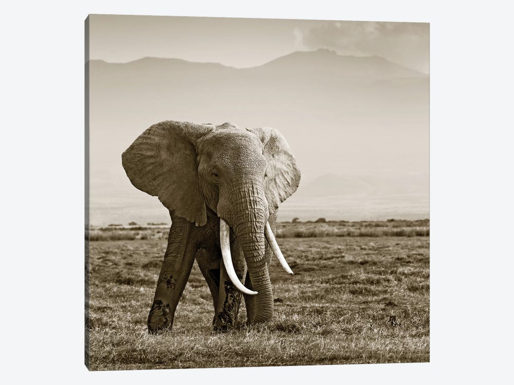 Big Tusked Elephant by Klaus Tiedge 1-piece Canvas Artwork