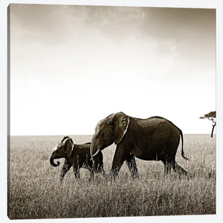 Bonded Elephant Canvas Print #KTI56} by Klaus Tiedge Canvas Print