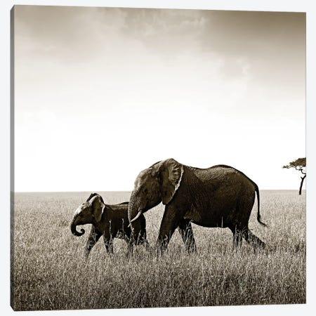 Bonded Elephant Canvas Print #KTI56} by Klaus Tiedge Canvas Print