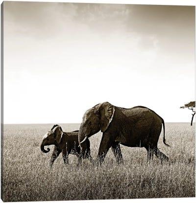 Bonded Elephant Canvas Art Print