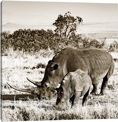 Bonded Rhino Canvas Art Print