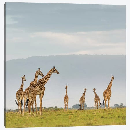 Color Giraffe Herd I Canvas Print #KTI58} by Klaus Tiedge Canvas Art