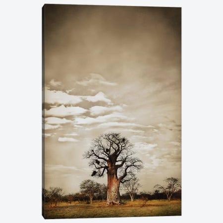 Baobab Hierarchy V 3-Piece Canvas #KTI5} by Klaus Tiedge Canvas Art
