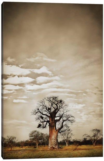 Baobab Hierarchy V Canvas Art Print