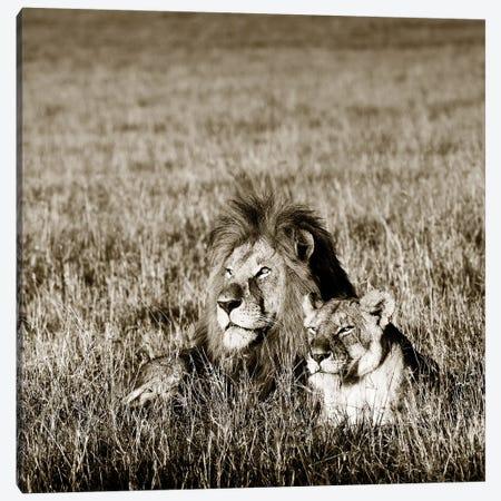 Contented Lion Canvas Print #KTI61} by Klaus Tiedge Canvas Print