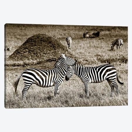 Cuddly Zebras Canvas Print #KTI63} by Klaus Tiedge Canvas Print