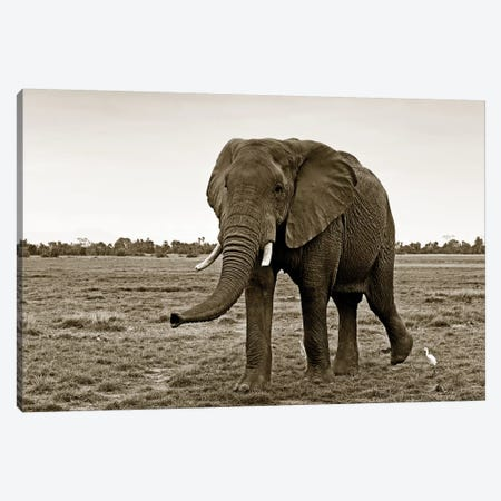 Curious Elephant Canvas Print #KTI64} by Klaus Tiedge Canvas Art